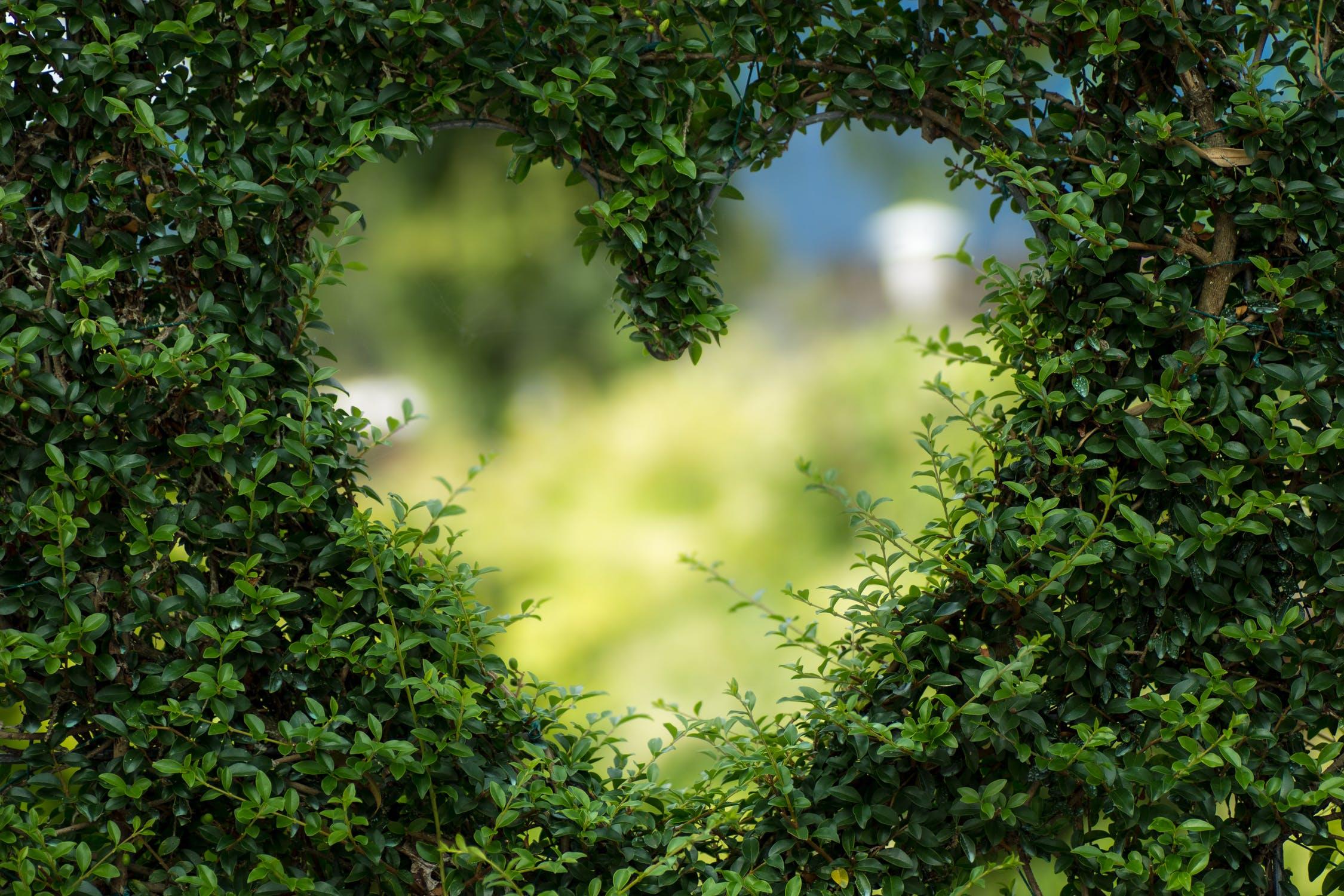 30 Ideas para jardines