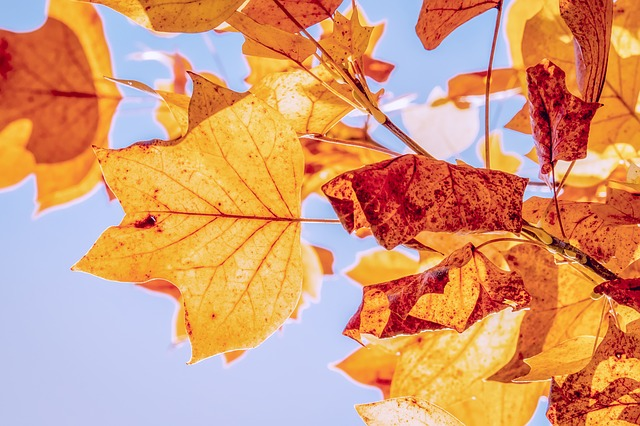 ¿Preparado para el otoño?