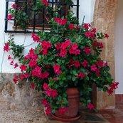 jardinespablo